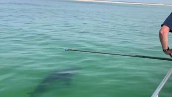 Is Forecasting Shark Sightings as Simple as Reading the Wind?