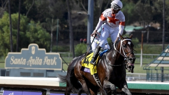 Breeders' Cup Sees 37th Horse Death at Santa Anita Since December