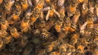 Arizona Man Stung To Death By Bees