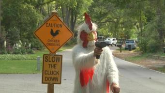 'Slow the Cluck Down!': Chicken Man Fights Speeders