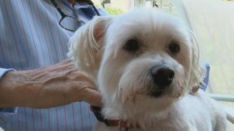 Hero Dog Saves Elderly Owner's Life