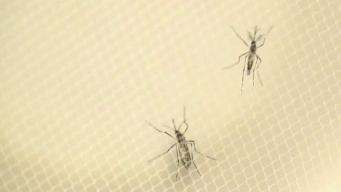 First Mosquitoes of Season Test Positive for West Nile Virus