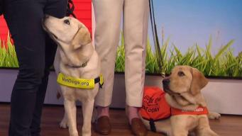 Today Show's Puppy With a Purpose Sunny Visits Brady