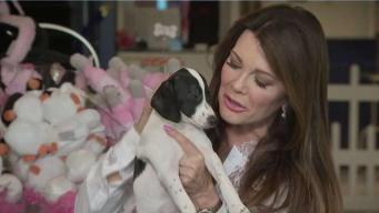 Shelter Pups Get Celebrity Treatment at Vanderpump Dogs