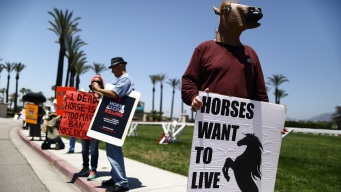 Santa Anita Season Ends After 30 Horse Deaths, Trainer Ban