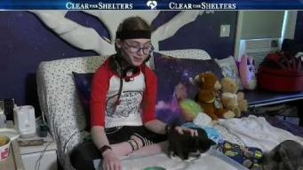 Vt. Teen Defies Challenges to Foster Kittens
