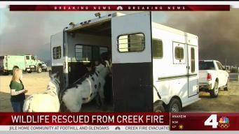 Wildlife Sanctuary Threatened by Creek Fire