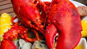 Labor Day Weekend Lobster Bake at City Tap House