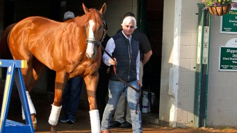 Baffert: Justify Doing Well After Treatment for Bruised Heel