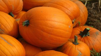 Enter to Win! NBC10 Boston's Pumpkin Carving Contest