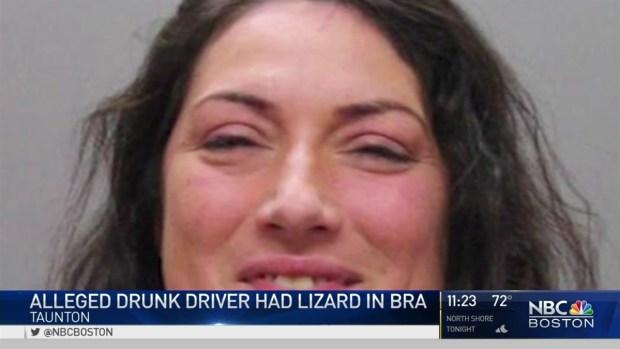 [NECN] Alleged Drunk Driver Had Lizard in Bra