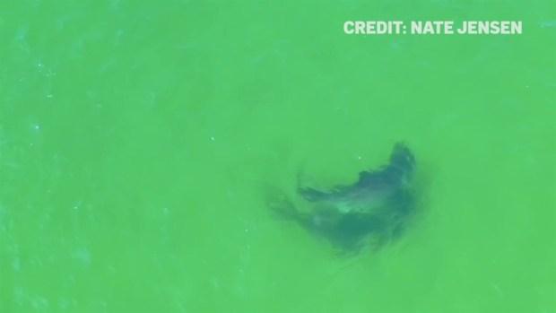 [NECN] Shark Scientist Explains Rare Shark Interaction