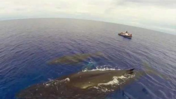 [NECN] Efforts to Save Endangered Right Whales
