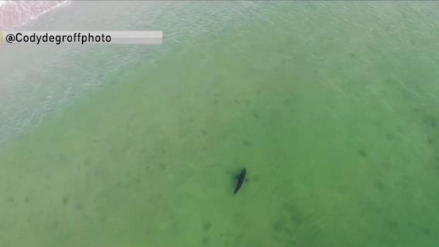 Harbormaster Warns Beachgoers About Sharks