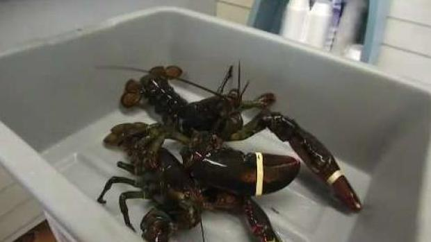 [NECN] How Climate Change Impacts Our Seafood