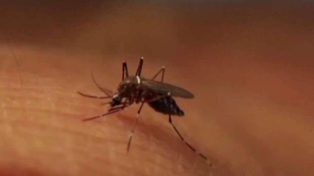 [NECN] More Mosquitoes Test Positive for EEE in Methuen