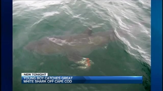 6-Year-Old Catches Great White Shark While Fishing Off Cape