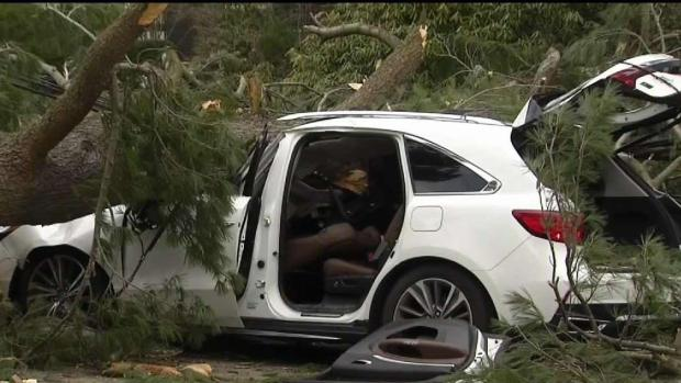 Tree Crushes Car With 4-Year-Old Girl and Nanny Inside