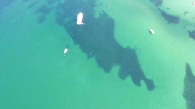 [NECN] Using Drones to Spot Sharks