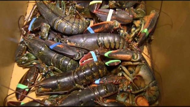 [NECN] Whales Causing Problems For Lobster Business
