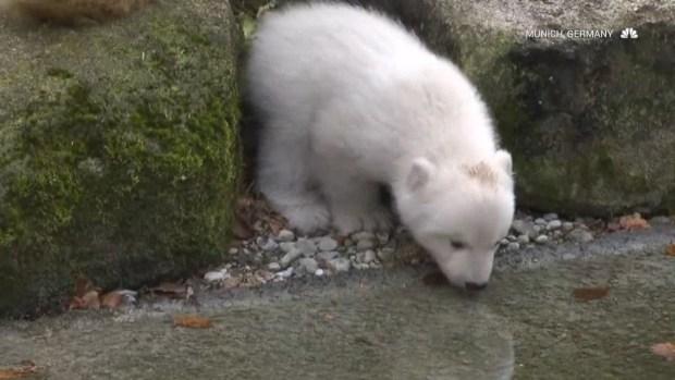 Recently Born Zoo Animals