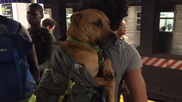 [NATL-NY] New Yorkers' Dogged Determination to Get Pets on Trains