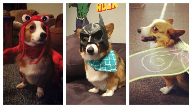 Your Photos: Pets In Halloween Costumes