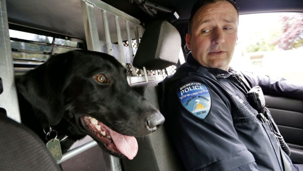 Working Like a Dog: 10 Jobs Canines Do