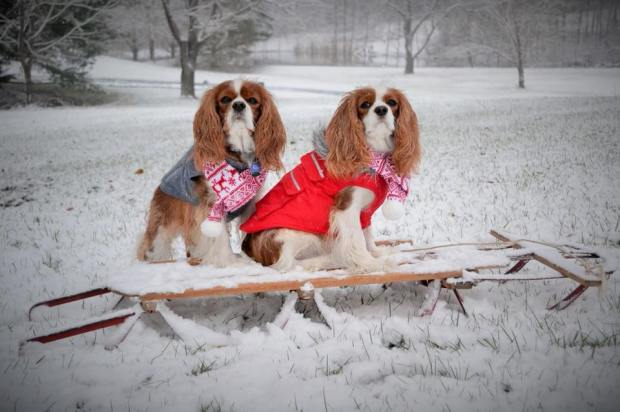 [NATL-DC]Local Pups Make a Fashion Statement During DC's Arctic Freeze