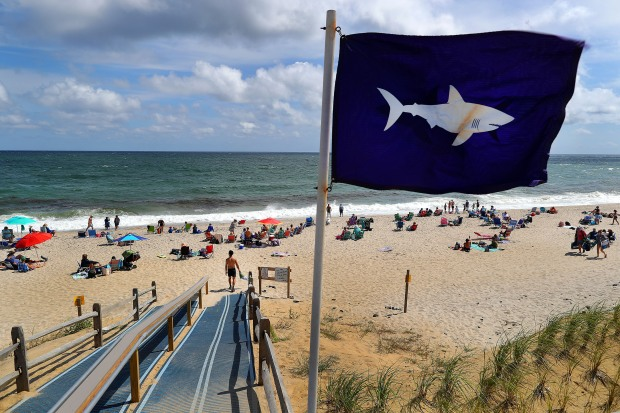 [NECN] The Meaning of the Shark Flags on Cape Cod Beaches