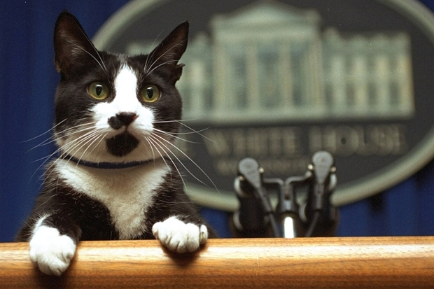 Presidential Pets Honoring White House Companions