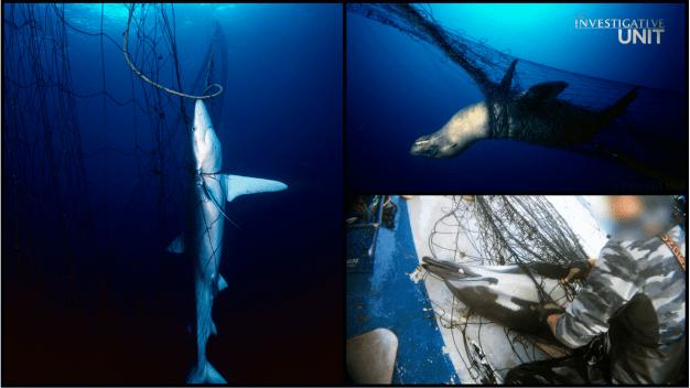 Law Aims to Ban Mile-Long Fishing Nets that Kill Sea Life