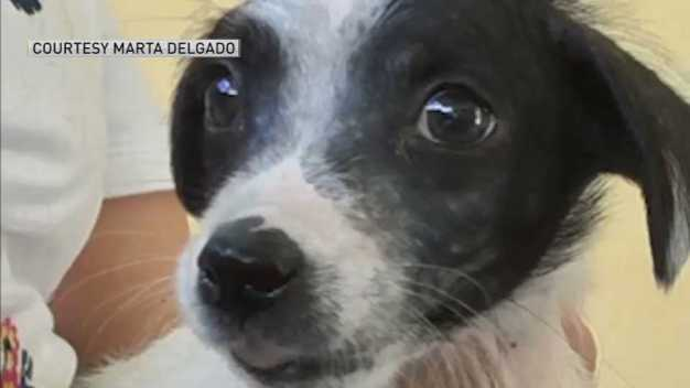 Dogs From Puerto Rico Get 2nd Chance