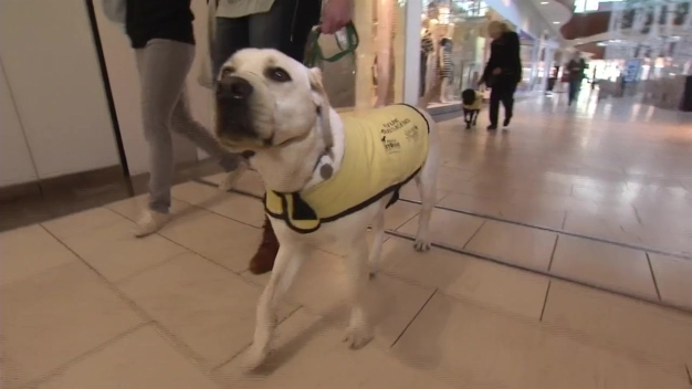 America's Vet Dogs Weekend Puppy Raisers