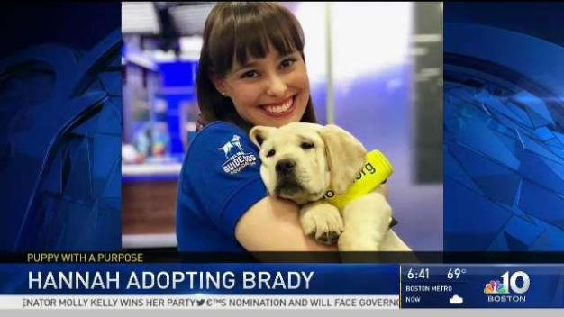 Bittersweet: NBC10 Boston Puppy's Last Day