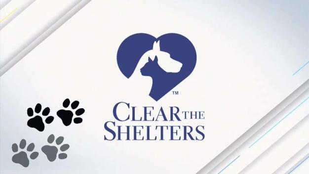 How to Register Your Organization for Clear the Shelters