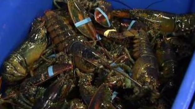 Lobsters Included in Tariffs From China