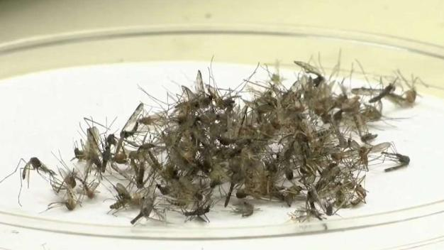 Officials Announce 10 New Human Cases of West Nile Virus