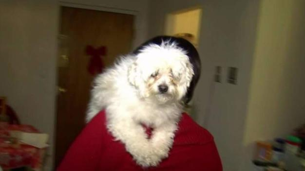 Tenant Threatens Lawsuit to Keep Dog