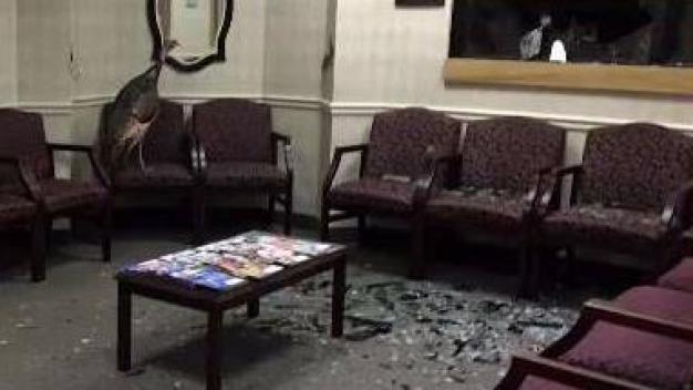 Turkey Wreaks Havoc in Dentist's Office