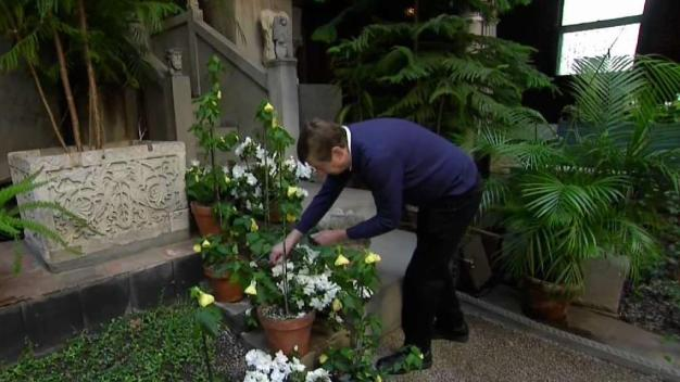 Uniquely Boston: 'the Gardener of the Gardner'