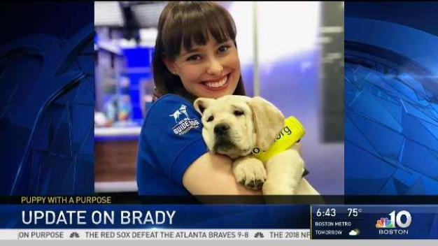 Update on NBC10 Boston Station Puppy, Brady