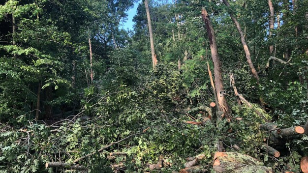 National Weather Service Confirms Tornado in Conn.