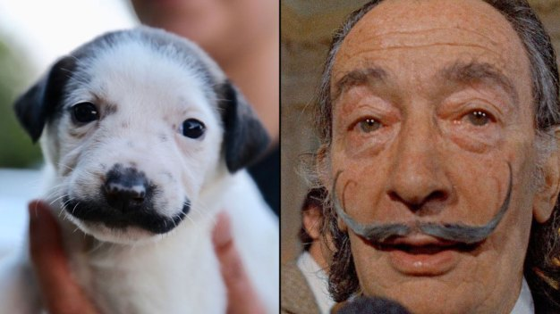 Mass. Couple Adopts Puppy Who Looks Like Salvador Dalí