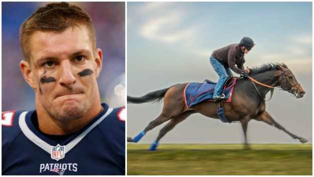 Gronkowski the NFL Player Buys Stake in Gronkowski the Horse