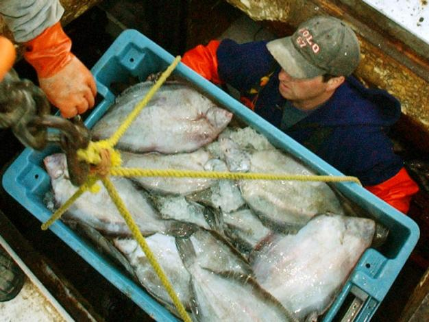 Feds: Popular Species of New England Flounder Is Overfished