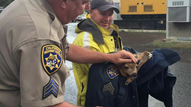 Officer Saves Deer Stuck in Drain During Calif. Thunderstorm
