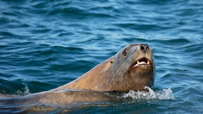 6 Sea Lions Shot Dead in Washington State, Wildlife Welfare Group Finds