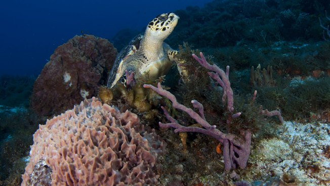 'Nature as an Asset': Coral Reef Insurance May Be a Sea Change for Conservation