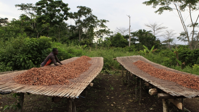 World's Top Cocoa Producers Fight to Protect Forests
